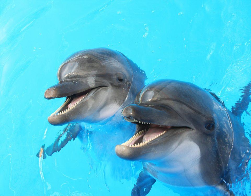 nage avec dauphins
